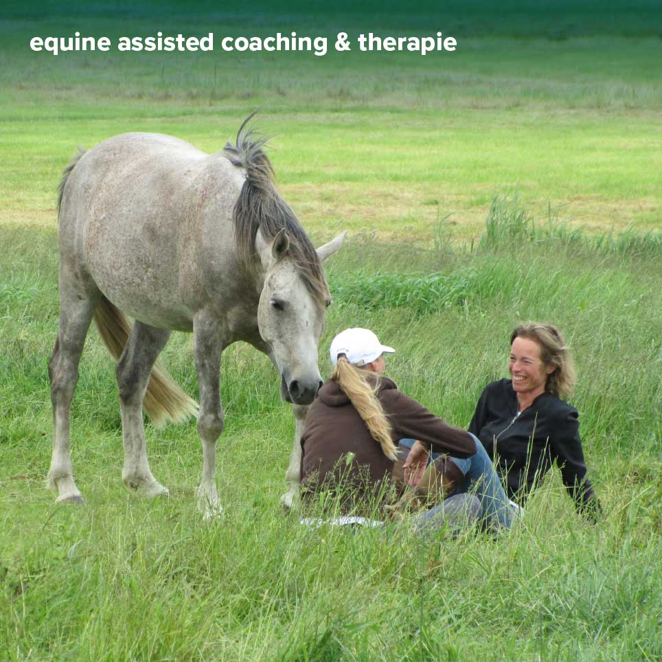 opleiding equine assisted coach